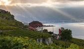 лаво, швейцария - террасы виноградника — Стоковое фото