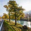 Stock Photo: River Rhone