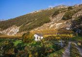 Swiss Vineyard — Stock Photo