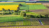 Swiss Farmland — Stock Photo