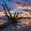 Dead Trees and Sunset — Stock Photo