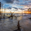 Dead Trees and Sunset — Stock Photo #31033695