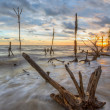 Dead Trees and Sunset — Stock Photo #31033727