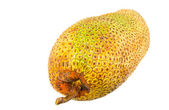 Cempedak Fruit — Stock Photo