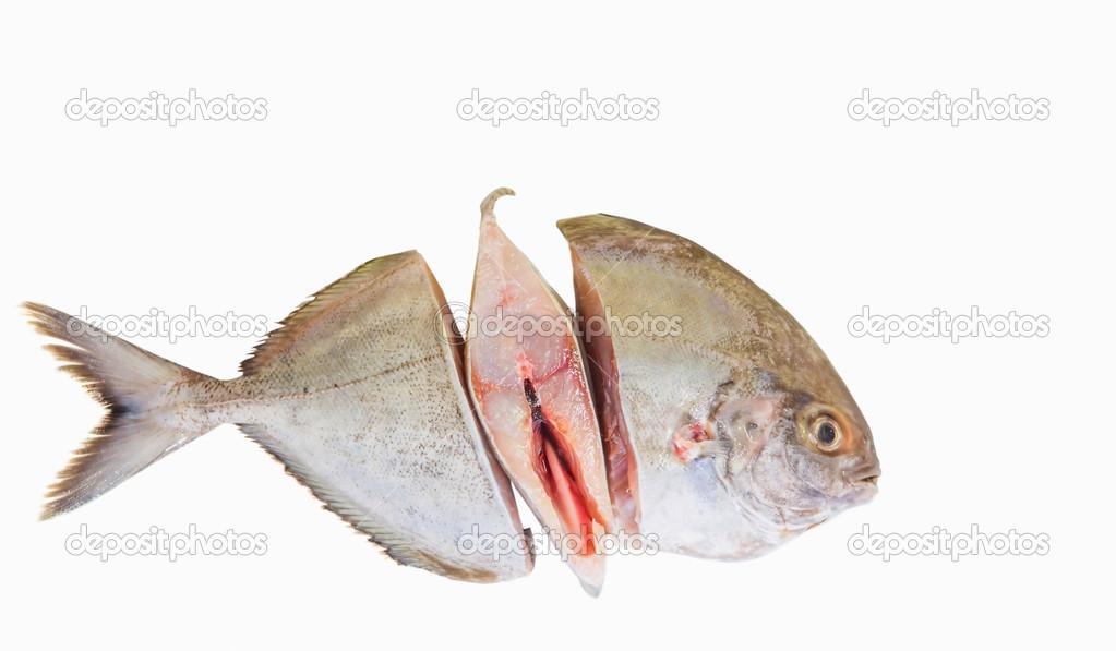 Pomfret fish