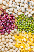 Variety of Beans and Lentils — Stock Photo