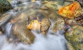 Jungle Stream — Stock Photo