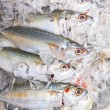 Stock Photo: Short-bodied Mackerel Fish