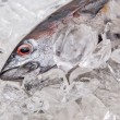 Fresh Mackerel Tuna — Stock Photo #39038671
