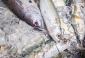 Mackerel Tuna And Short Mackerel — Stock Photo