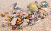 Clams And Seashells — Foto de Stock