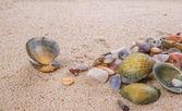 Moluscos e conchas — Fotografia Stock