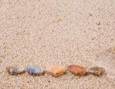 Clams And Seashells — Stock Photo