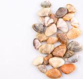 Conchas — Fotografia Stock