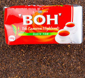 Boh Tea — Foto de Stock