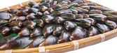Saltwater Mussels — Stock Photo