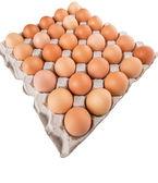 Chicken Egg — Stock Photo