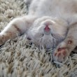 Stock Photo: Kitten on carpet