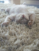 котенок на ковер — Стоковое фото
