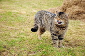 Handicapped cat — Stock Photo