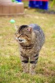 Cat at garden — 图库照片
