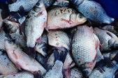 Fish background — Stock Photo