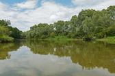летний пейзаж с рекой — Стоковое фото