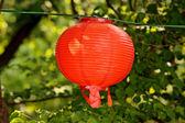 Single red lantern over green background — Foto de Stock