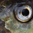 Fish eye close up — Stock Photo #12709876