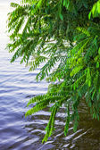 Bushes leaned over water — Foto Stock