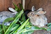 Bazı tavşan kafes içinde — Stok fotoğraf