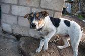Cão sobre o retrato de cadeia — Fotografia Stock