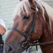 Stock Photo: Mounted Police Horse palomeno