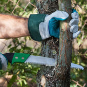 Pruning tree — Stock Photo
