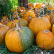 Lot of pumpkin at outdoor — Stock Photo