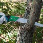 Pruning tree — Stock Photo #30593229
