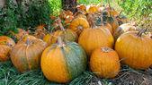 Lot of pumpkin at outdoor — Stock Photo