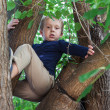 Boy climbed up a tree — Stock Photo