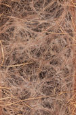 Withered wheat roots — Foto Stock