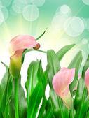 Kala květ — Stock fotografie
