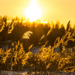 Winter sunset — Stockfoto
