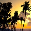 Palms on sand beach — Stock Photo