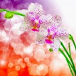 Orchid flower — Stock Photo #19262715