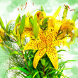 Lilly flowers — Stockfoto