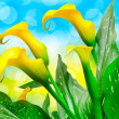 Calla lily flower close up - Stock Photo