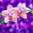 Close up of orchid flower — Stock Photo