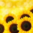 Close up of sunflower — Stock Photo #19592083