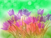 Abstract flower background tulip flowers — Stock Photo