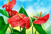 Röd anthurium blomma — Stockfoto