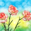 Carnation flower — Stock Photo #19891693